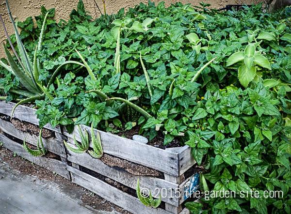 Reused Container Garden