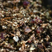 Best Raw Food Granola