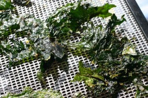 Kale Chips on dehydrator tray